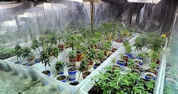 JNS.MarijuanaRaid2